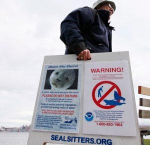 ONG Seal Sitters promove campanha de proteção à vida marinha após filhote de foca morrer depois de ser retirado da praia por mulher. Foto: Elaine Thompson/Associated Press
