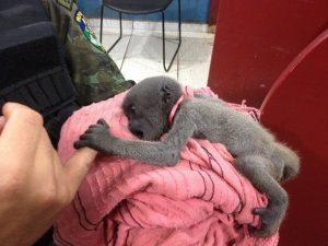 Filhote foi encaminhado para o Centro de Triagem de Animais Silvestres (Cetas). Foto: Matheus Henrique/ G1