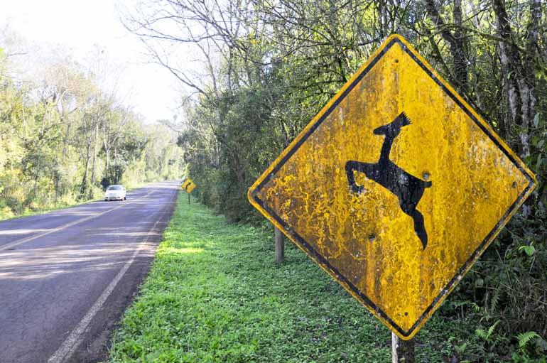 Maior índice de atropelamentos é registrado na zona sul de Londrina, segundo a Polícia Ambiental.