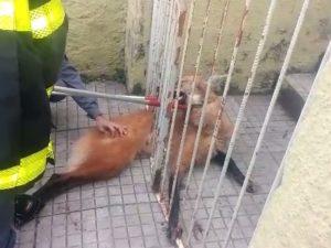 Animal será solto em reserva ambiental perto de Cláudio. Foto: Alisson de Faria/Arquivo pessoal