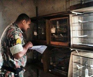 Policial militar ambiental faz fiscalização em área de criador de aves. Foto: Divulgação / PMA