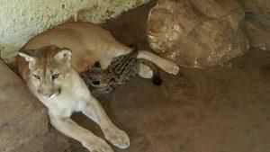 Os animais recebem cuidados especiais. Foto: Semar
