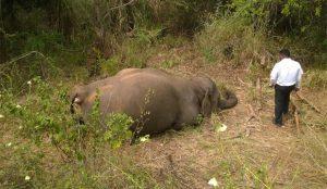 Quatro elefantes morreram atropelados por trem em Sri Lanka. Foto: Reprodução/Facebook/Upul S Adikari