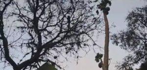 Animais subiram em galhos altos para não serem atingidos por chamas. Foto: Reprodução/TV TEM