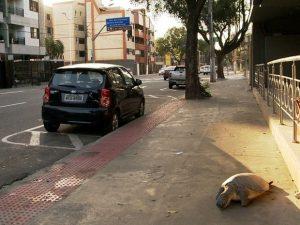 Tartaruga morta foi abandonada em frente a restaurante. Foto: Oliveira Alves/ TV Gazeta
