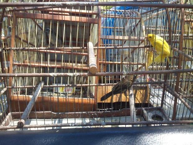 Polícia e Guarda Ambiental realizou soltura de pássaros silvestres (Foto: Guarda Municipal de Limeira )