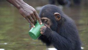 Ex-funcionários do NYBC cuidam dos animais. Foto: Jenny Desmond/Divulgação