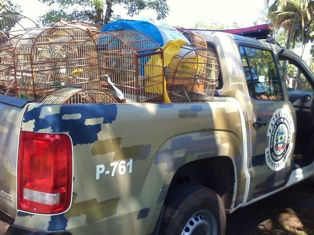 Aposentado mantém 33 pássaros silvestres em cativeiro (Foto: Guarda Municipal de Limeira)