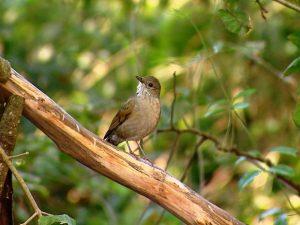Aves são reabilitadas para viver soltas na natureza. Foto: Ely Venâncio/TG