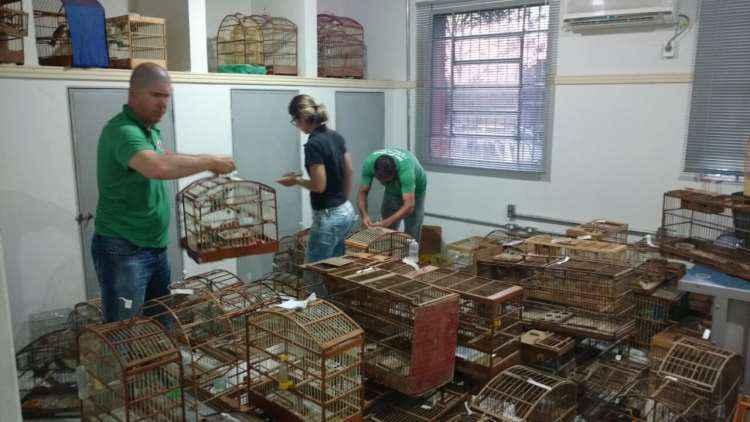 Materiais apreendidos durante a operação no Norte de Minas (foto: Sisema/Divulgação)