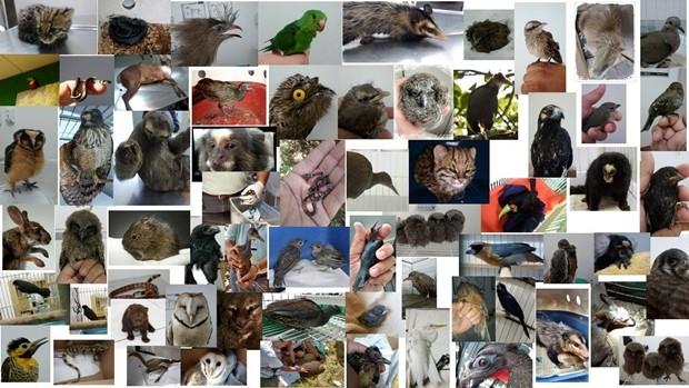 Mosaico com os animais socorridos pelo médico veterinário de Mogi das Cruzes, Jefferson Leite. (Foto: Jefferson Leite/ Arquivo Pessoal)