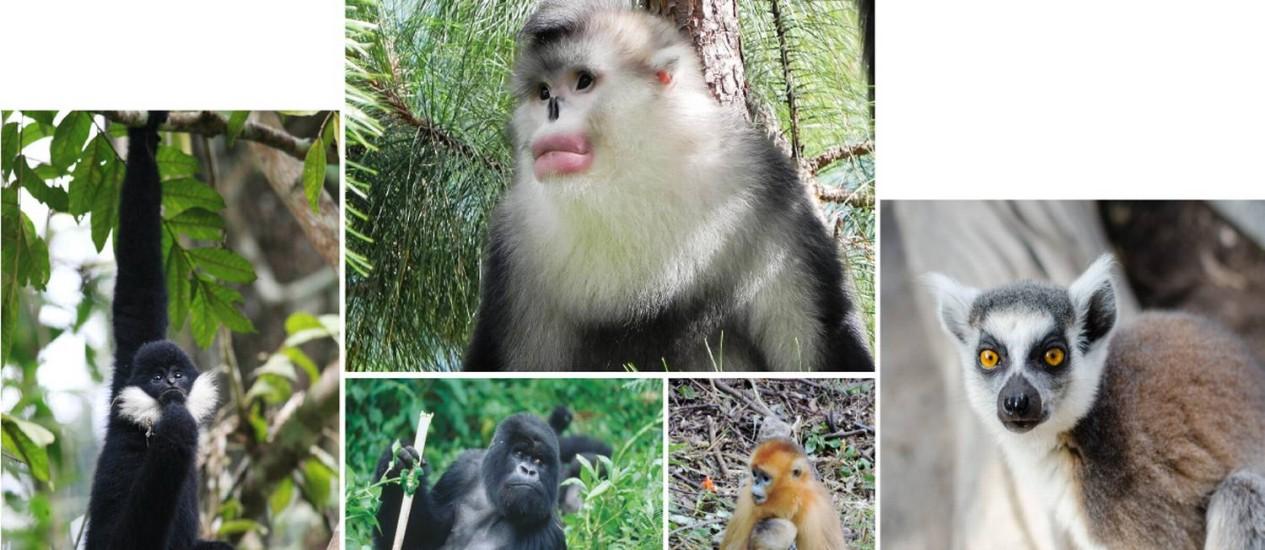 Relatório alerta para a triste realidade que enfrentam os parentes mais próximos dos humanos no mundo animal.
