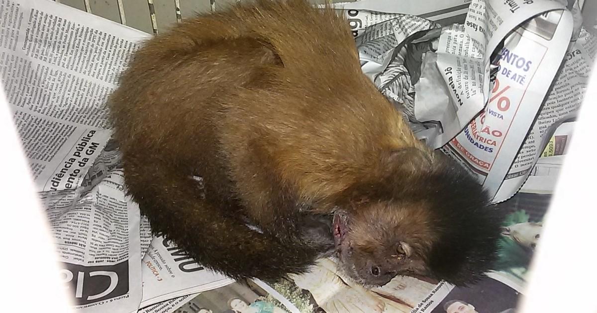Animais chegaram feridos a hospital veterinário, um deles não resistiu. Bater, maltratar ou matar animais silvestres é crime.