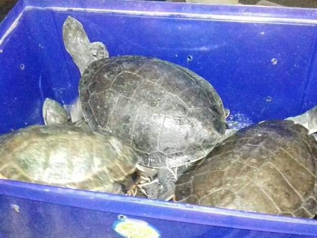 Tartarugas eram transportadas dentro de caixas em veículo (Foto: Divulgação/PRF)
