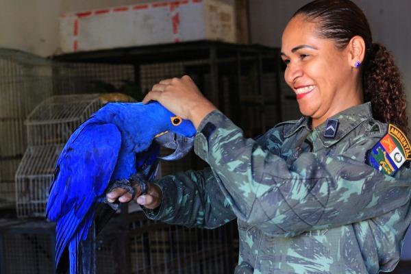 70 animais resgatados foram devolvidos ao meio ambiente. Em 2016 foram registrados 851 resgates.