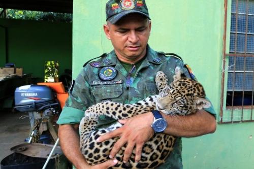 Felino resgatado pelo Batalhão: trabalho incansável pela proteção meio ambiente. Foto: Gcom-MT