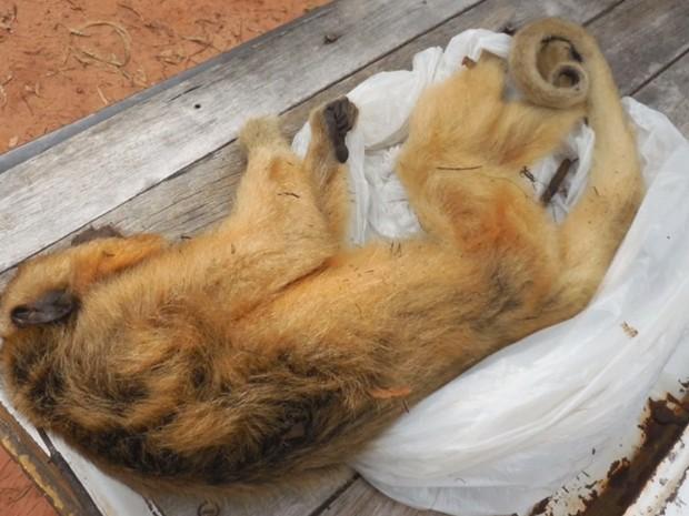 Macaco encontrado morto em Cardoso; suspeita é envenenamento (Foto: Reprodução/TV TEM)