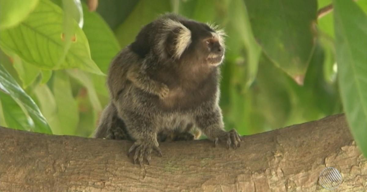 Caso ocorreu em Genipapo, no município de Saúde, no norte do estado. Exame confirmou febre amarela em um dos animais.