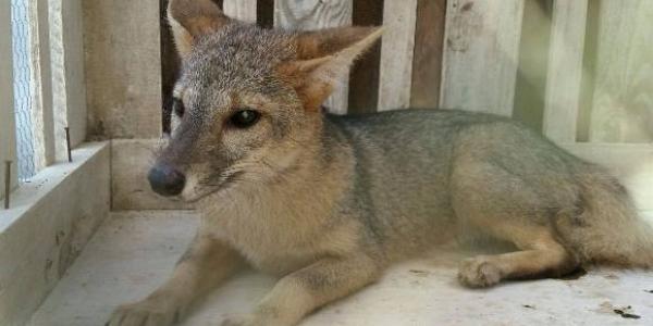 Equipe de fauna da FPI montou, no município de Arapiraca, uma estrutura para recebimento dos animais (Foto: Ascom / IMA-AL)