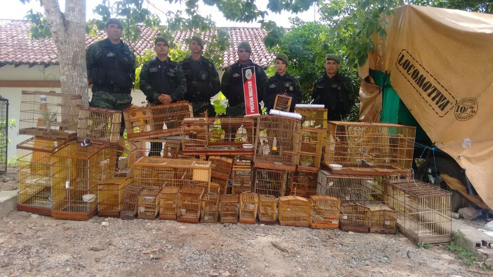 BPAmb resgatou mais de 600 animais na Paraíba, lavrou 120 Autos de Infração e prendeu 84 pessoas (Foto: Major Cristóvão Lucas/BPAmb/Arquivo)