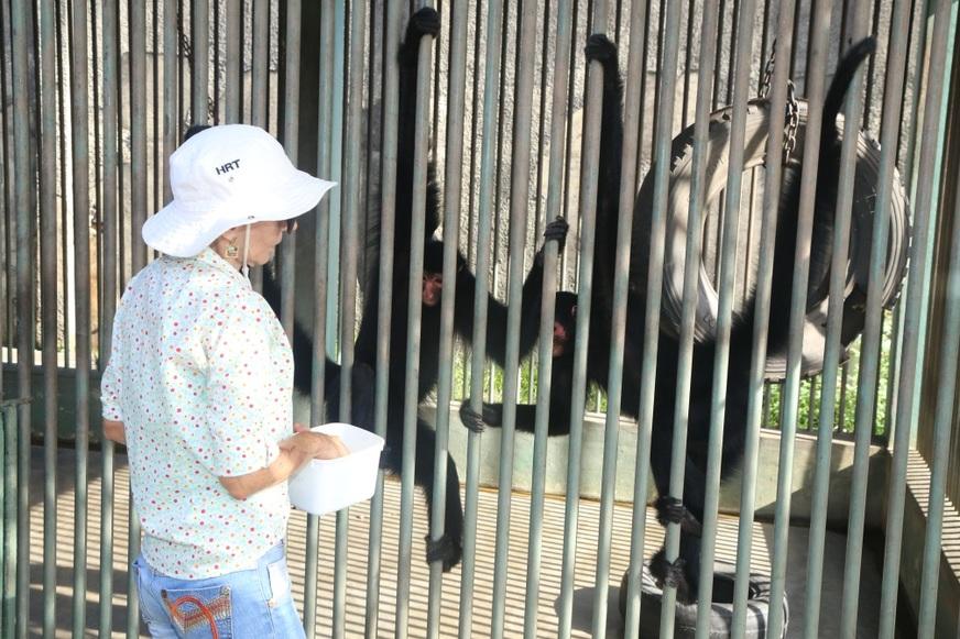 Lenita com sua 'primogênita' entre os animais resgatados que vivem na Reserva Cariuá: a primata da espécie quatá, Priscila. Foto: Márcio Silva