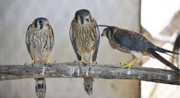 Crédito: Marcelo Ferreira.  Entrega voluntaria de animais silvestres no CETAS (Centro de Triagem de Animais Silvestres).
