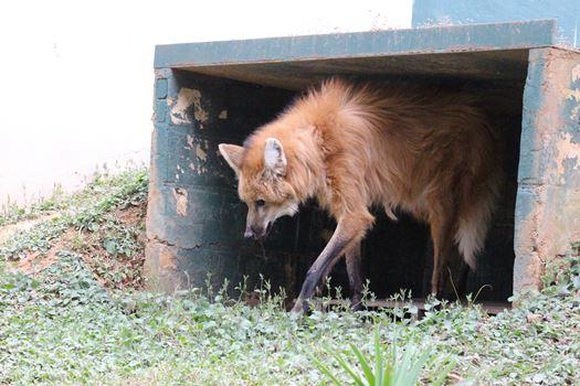 As duas lobas apesar do mesmo destino têm origens e histórias diferentes.