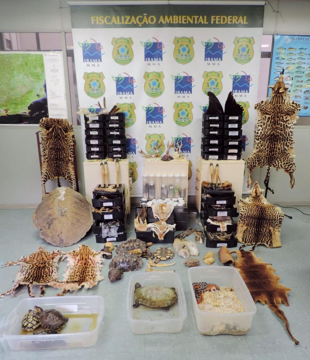 A operação Nigromante, do Ibama, visa coibir a comercialização ilegal de animas da fauna silvestre e exótica por meio das redes sociais (Foto: Divulgação/ IBAMA)