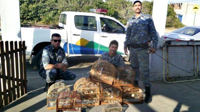 Guarda Ambiental apreende aves silvestres em Rio das Ostras/ Foto: Guarda 24h
