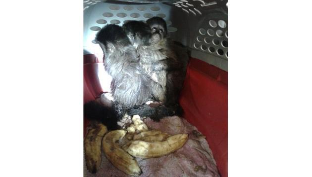 Animais foram apreendidos com um casal em Araraquara