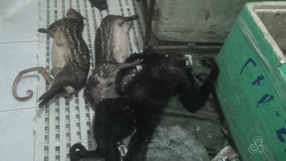 Animais seriam vendidos na Guiana Francesa (Foto: Reprodução/Rede Amazônica)