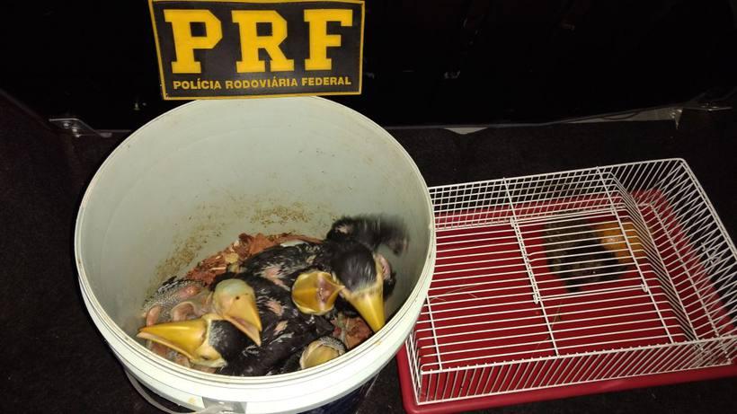 Aves foram colocadas em balde e sagui em gaiola e corriam risco de morrer na viagem
