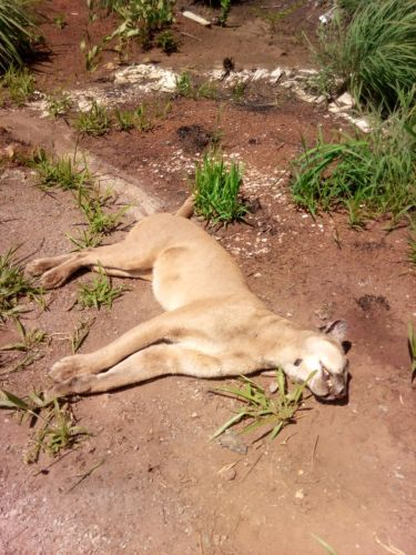 Animal foi encontrado morto perto da Área Alfa da Marinha, nas imediações do Catetinho.