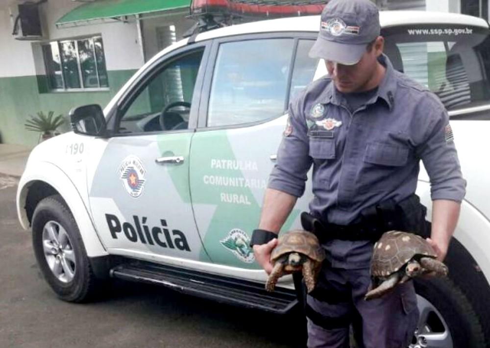 Policial segura dois jabutis apreendidos durante ação contra de venda de animais silvestres pelas redes sociais (Foto: Polícia Ambiental/Divulgação)