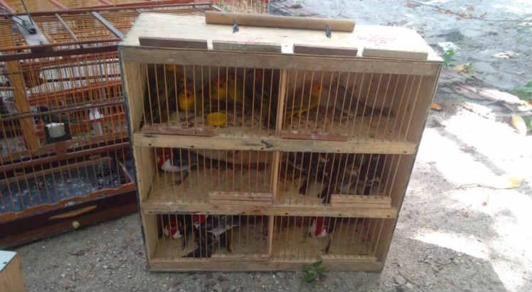 A operação resgatou animais de 15 espécies diferentes Foto: Cipoma/Divulgação