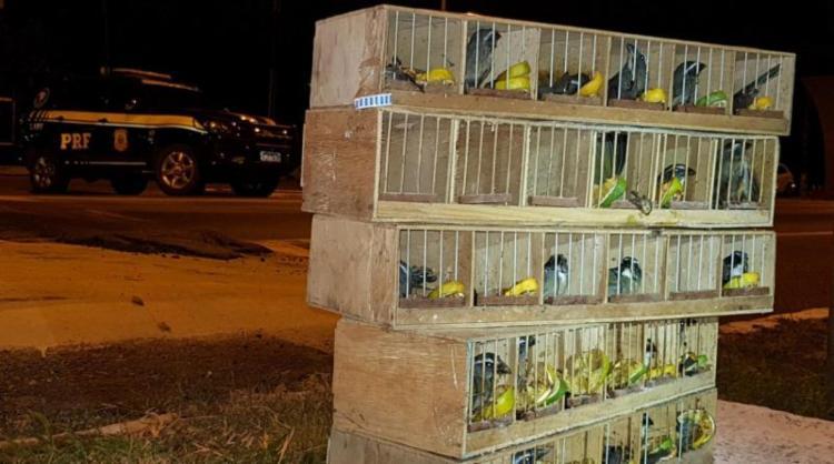 Os pássaros estavam escondidos no compartimento do tanque de combustível em um ônibus de turismo.