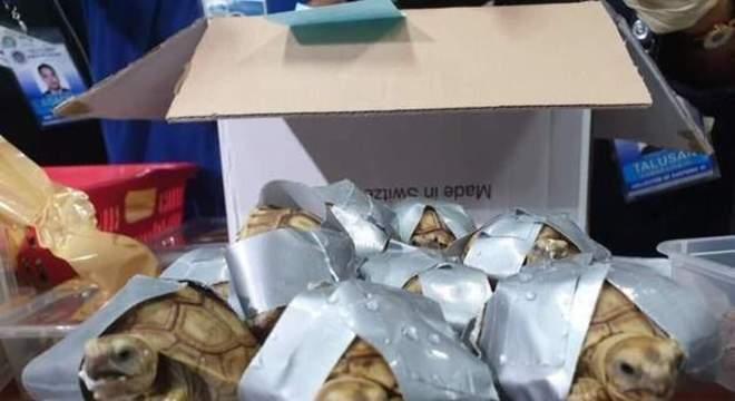 Animais silvestres foram encontrados com as patas presas por fita adesiva e empilhadas dentro de malas que vinham de Hong Kong