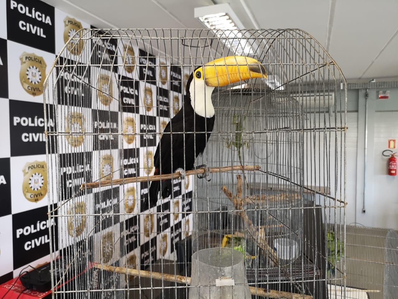 Proprietário de tucanos vendia os animais pelo Facebook (Divulgação/Polícia Civil)
