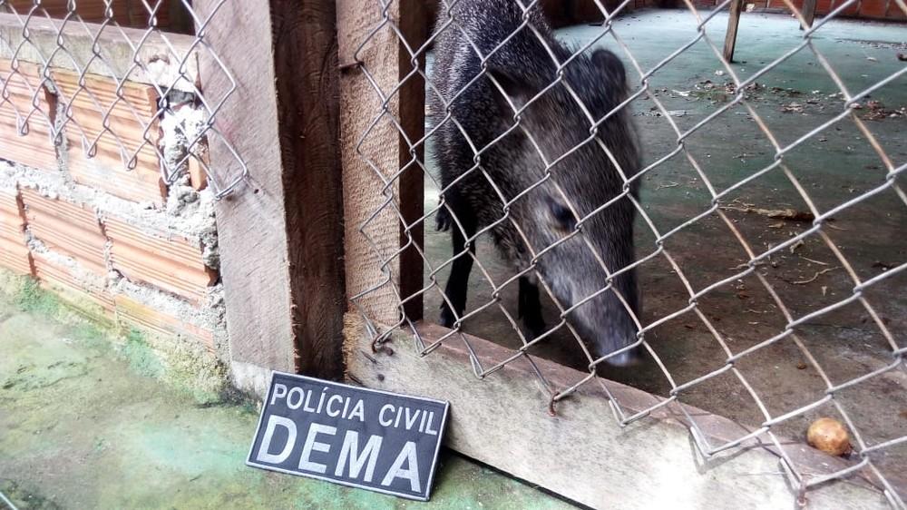 Animais silvestres mantidos eram em local e condições inapropriadas — Foto: Dema/Divulgação
