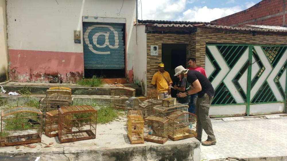 Mais de 80 aves silvestres são resgatadas de cativeiro na Bahia e levadas para parque de preservação ambiental — Foto: Divulgação/SSP