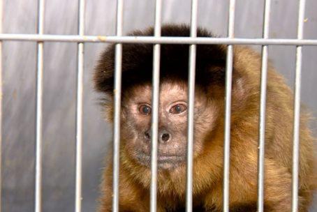 O desejo de possuir animais exóticos estimula o comércio e o contrabando de primatas — Foto: Arquivo TG