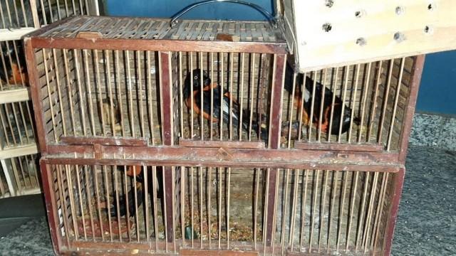 Aves estavam dentro de carro que seguia para o Rio de Janeiro Foto: Divulgação