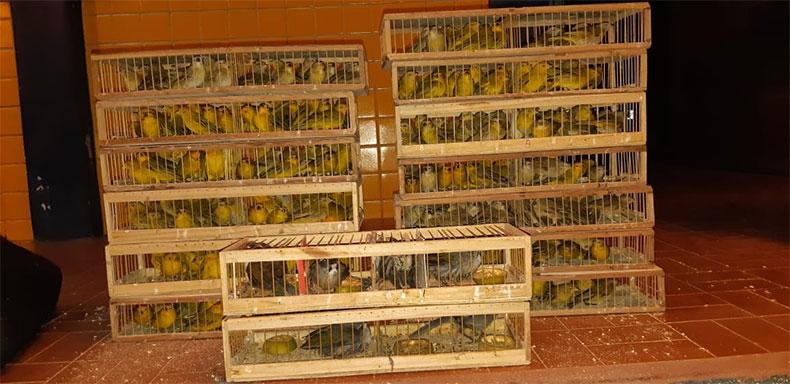 Pássaros estavam escondidos em carroceria de carro no Sul do Piauí — Foto: Divulgação/PRF