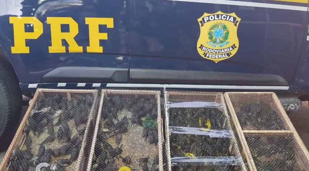 Pássaros foram resgatados na cidade de Jequié, sudoeste da BA — Foto: Polícia Rodoviária Federal