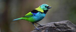Tráfico de animais silvestres afeta 18% das espécies de aves, mamíferos, répteis e anfíbios