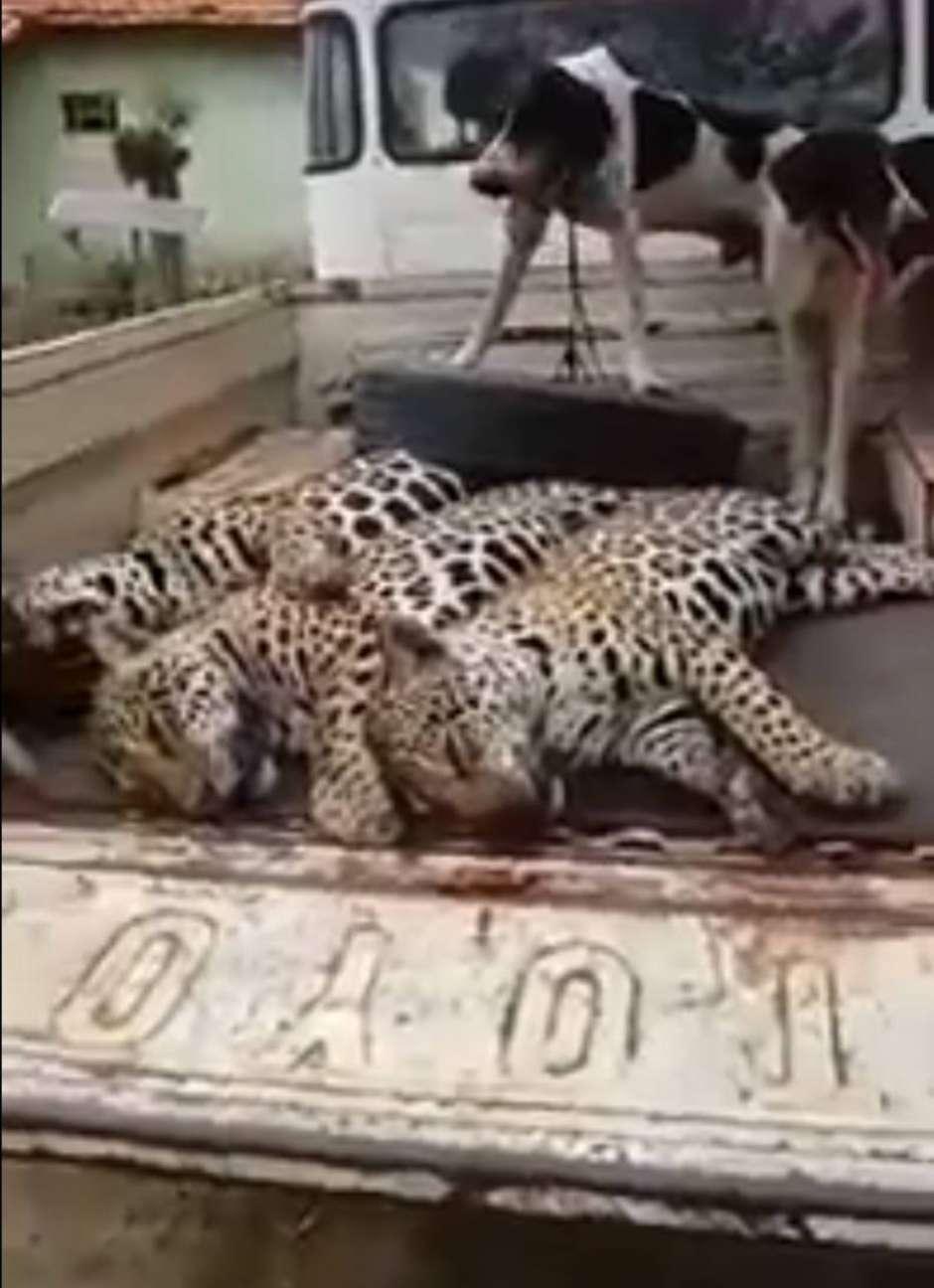 Mulher responsável pela filmagem parabeniza o suspeito por morte dos animais Foto: Reprodução / Estadão