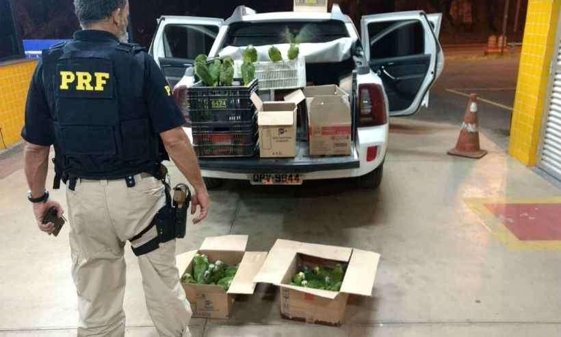 Animais estavam sendo transportados em caixas de papelão e plástico (foto: Polícia Rodoviária Federal (PRF) / Divulgação)