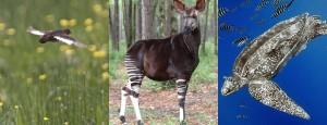 Portal Globo.com – G1 Organização inclui novos animais na lista de ameaçados de extinção