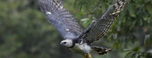 Fotógrafo de National Geographic é premiado no HBW – World Bird Photo Contest