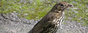 Estudo aponta que ondas de rádio afetam aves migratórias